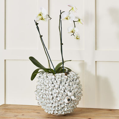 Round Barnacle Ceramic Vase, , default