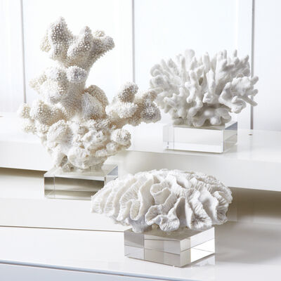 Set of Three White Coral Sculptures with Glass Stands